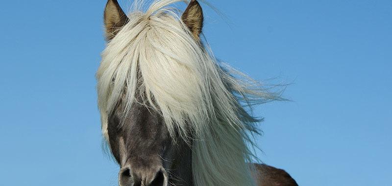 Champú Monovin A para dar brillo a la crin de los caballos