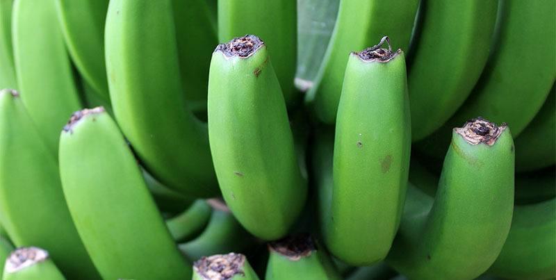 detalle piña de plátanos verdes