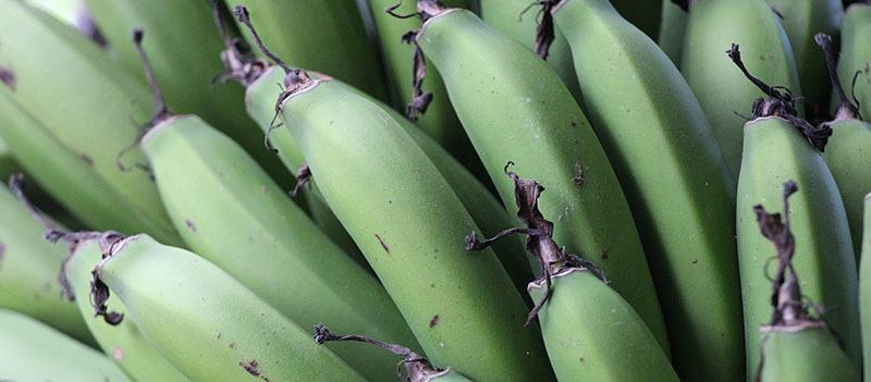 detalle racimo de plátanos verdes