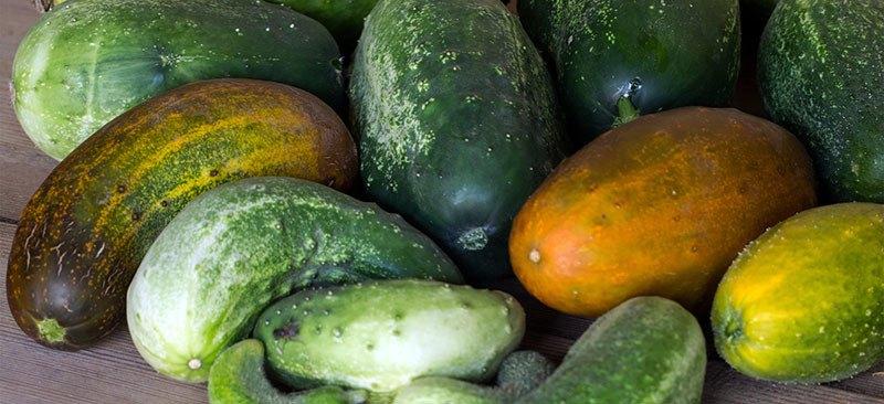 Pepino: propiedades, beneficios y efectos secundarios