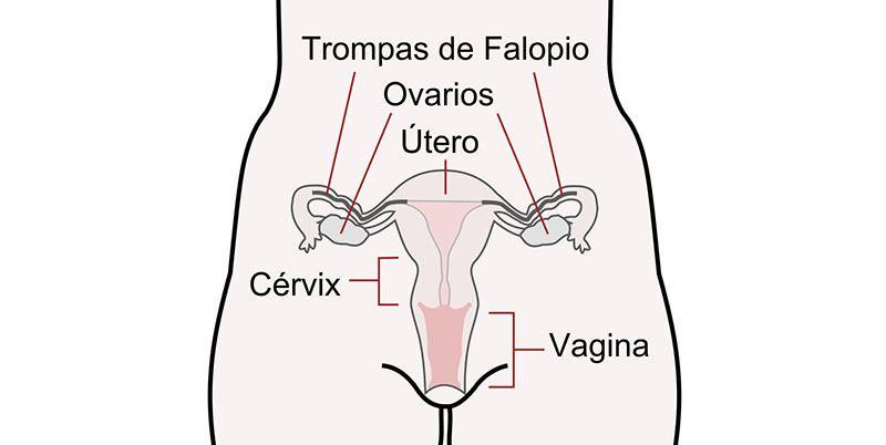 10 semanas de embarazo dolor de ovarios