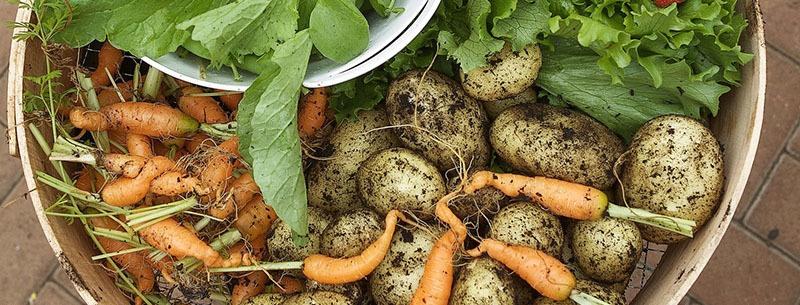 alimentos orgánicos más caros y peor aspecto