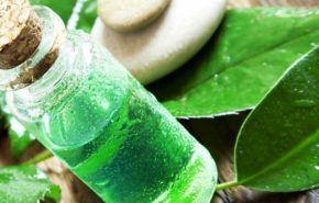 Aceite Esencial de Árbol de Té – Melaleuca