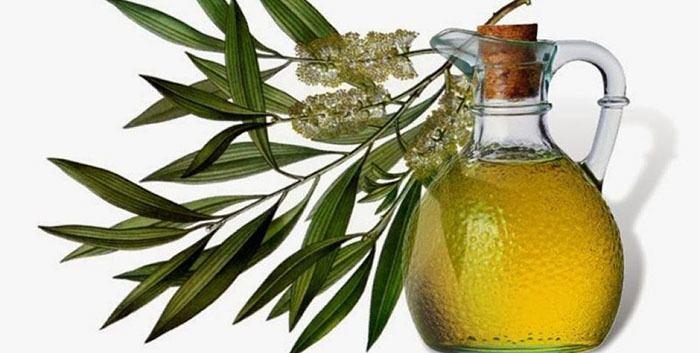 Propiedades del Aceite Esencial de Árbol de Té