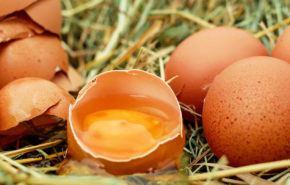 Huevos: ¡¡¡9 Razones para incluir este Súper Alimento en tu dieta!!!