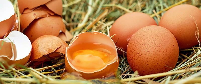Debemos Incluir huevos en la dieta