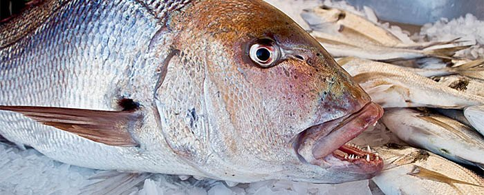 El pescado es un alimento para el cerebro
