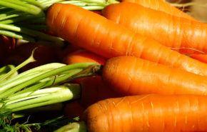 Zanahoria: Propiedades, beneficios y usos