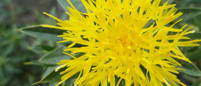 Propiedades antioxidantes de la manteca de karité