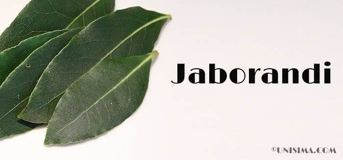 Hojas de Jaborandi
