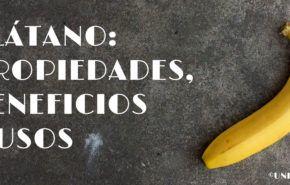 Plátano: Propiedades, Beneficios y Usos
