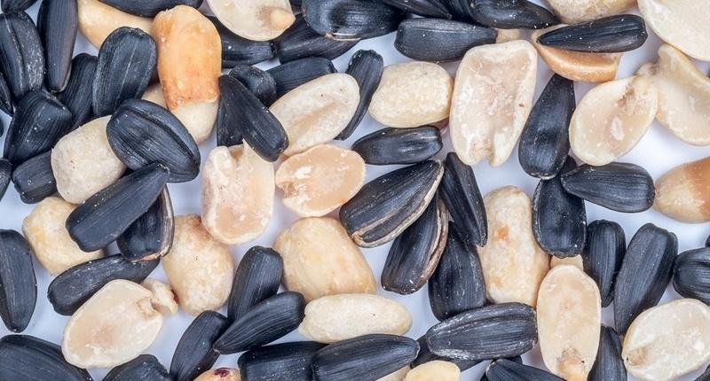 Consumir semillas contribuye a mejorar la condición