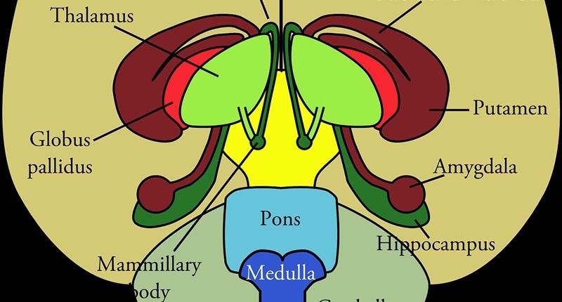 Posibles causas de la anovulación