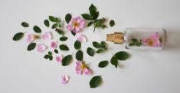 Mejores Ingredientes de Desodorantes ORGÁNICOS y totalmente NATURALES