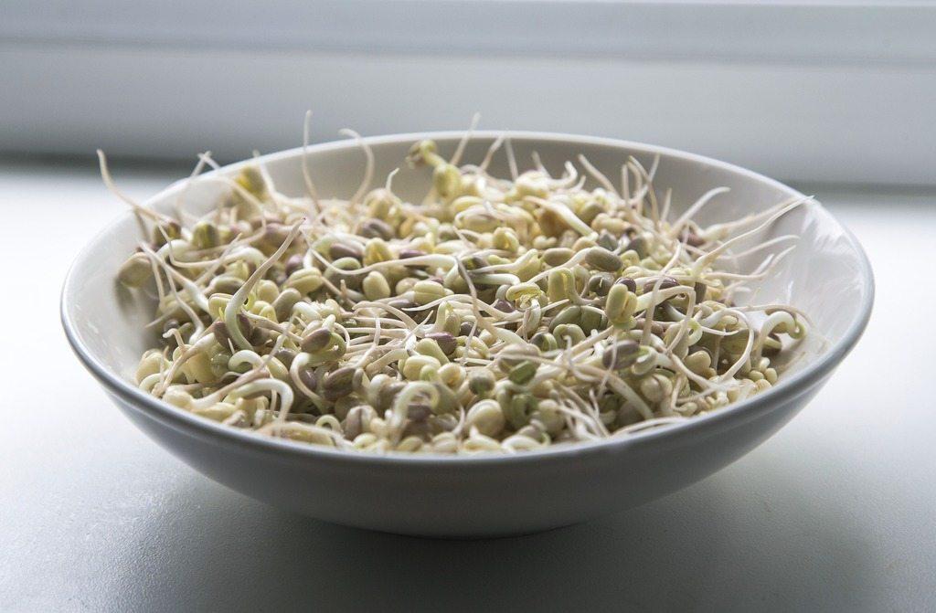 frijoles-germinados