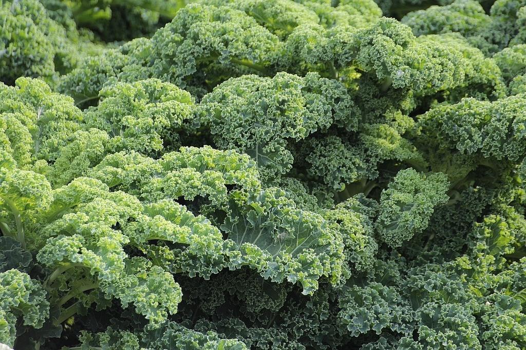 cómo comer el kale