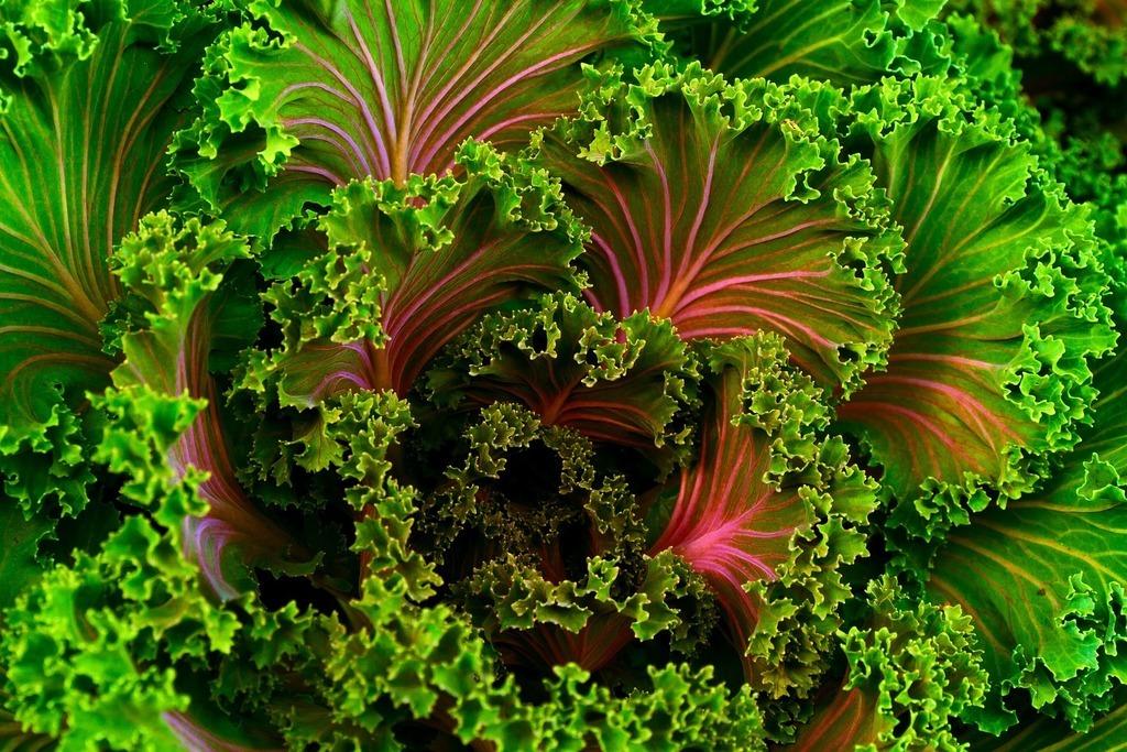 Características principales de los chips de Kale