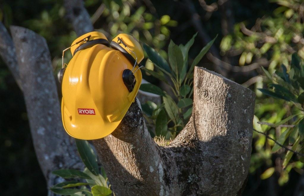 Como podar adecuadamente un árbol de aguacate