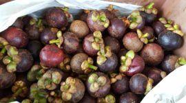 El jugo de mangostán y sus increíbles propiedades para la salud
