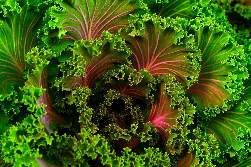 Es mejor el kale a temperatura ambiente o congelado