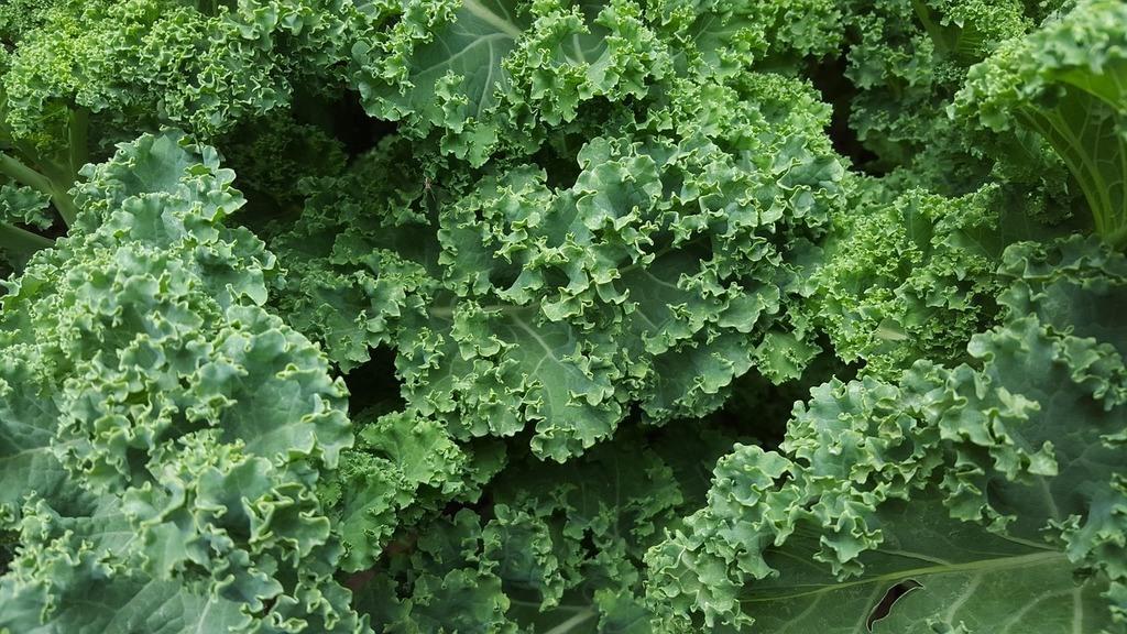 Formas incorrectas de cocinar el kale