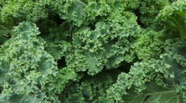 Cómo cocinar Kale al horno y Dosis a tomar