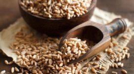 Espelta, el trigo antiguo: Contraindicaciones, Beneficios, Usos y Origen