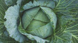 Aprende Cómo Cocinar Kale y dale un gusto a tu paladar