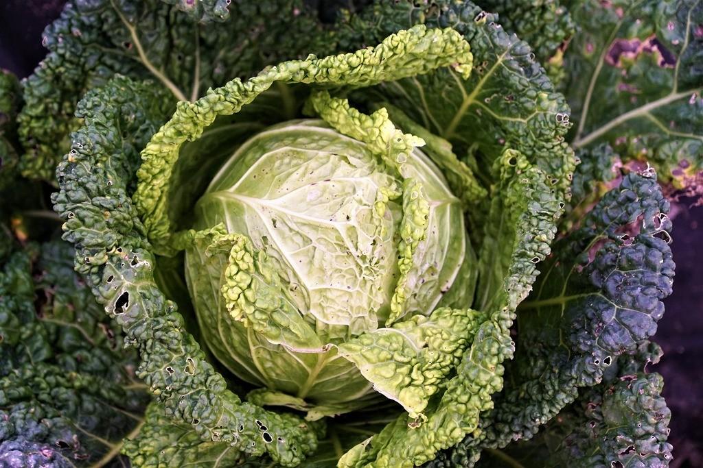 Procedimiento correcto para preparar los chips de kale
