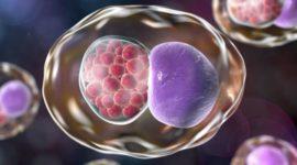 Infección por clamidia: Todo lo que necesitas saber